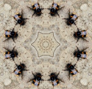 Insects Kaleidoscope Dancer Circle Bumblebee Ring