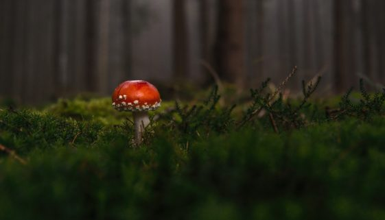 forest-1097403_960_720