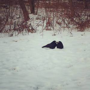 crows-dotting-snow